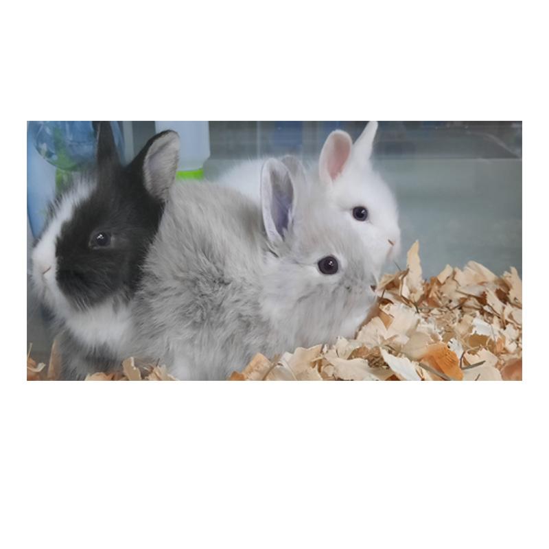 Kunić i ja